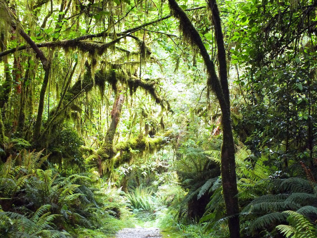 New Zealand 13